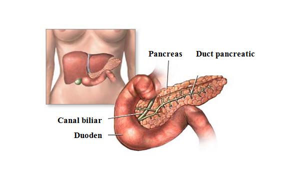 vederea bolii pancreatice